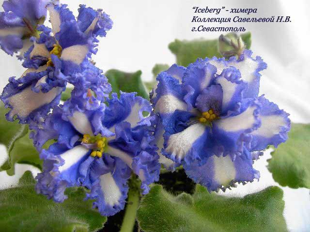 http://violet-nataly.narod.ru/images_/chimera/iceberg_h.jpg